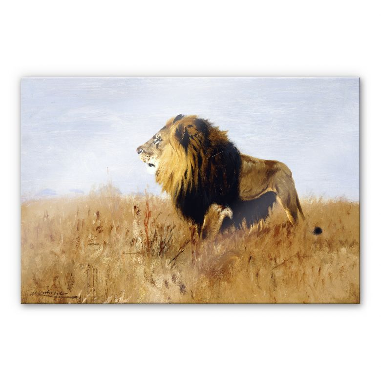 acrylic glass lion on search for prey. Black Bedroom Furniture Sets. Home Design Ideas