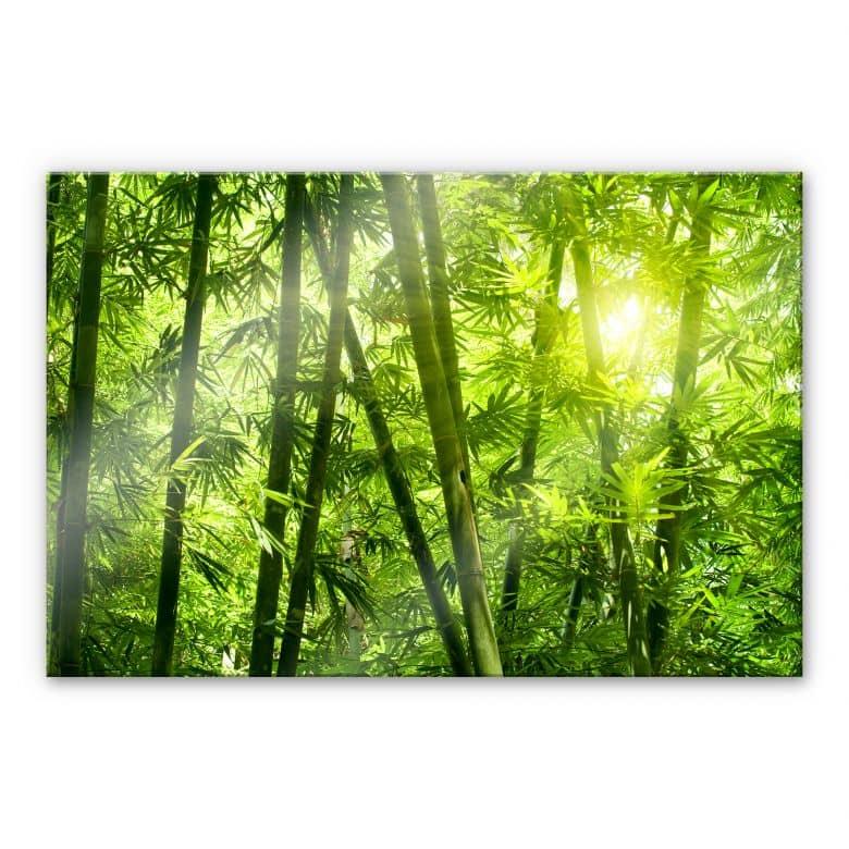 Acrylglasbild Sonnenschein im Bambuswald