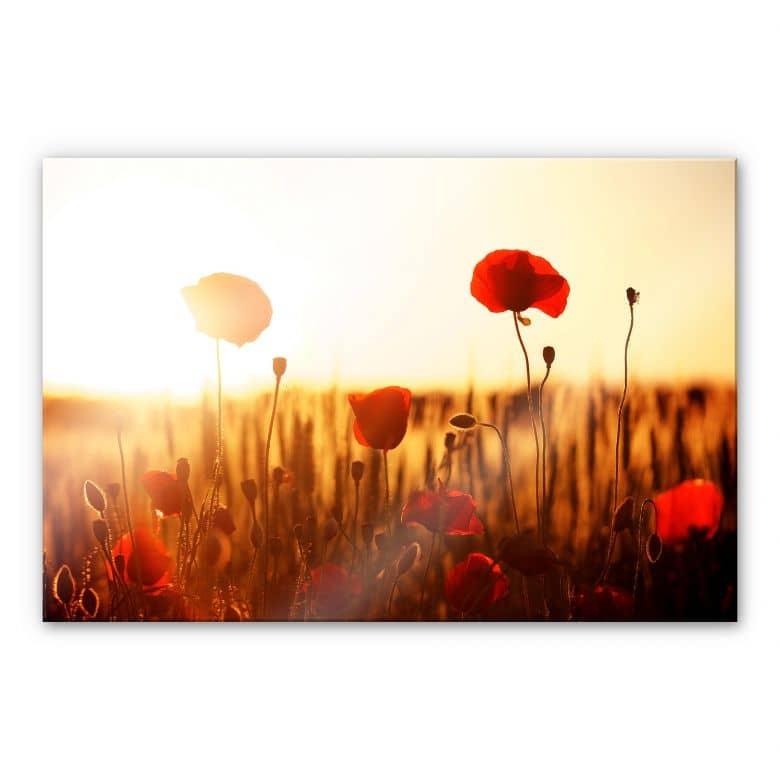 Acrylglasbild Sonnenflut im Mohnfeld