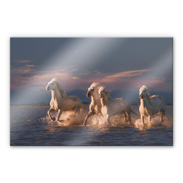 Acrylglasbild Rostovskiy - Angels of Camargue
