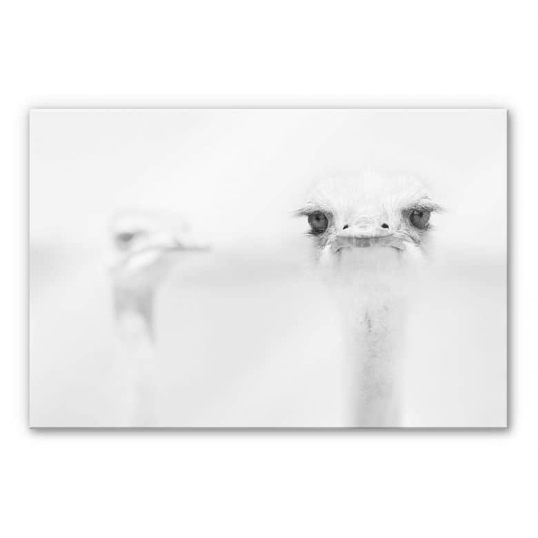 Acrylglasbild Tonti - Augenblick