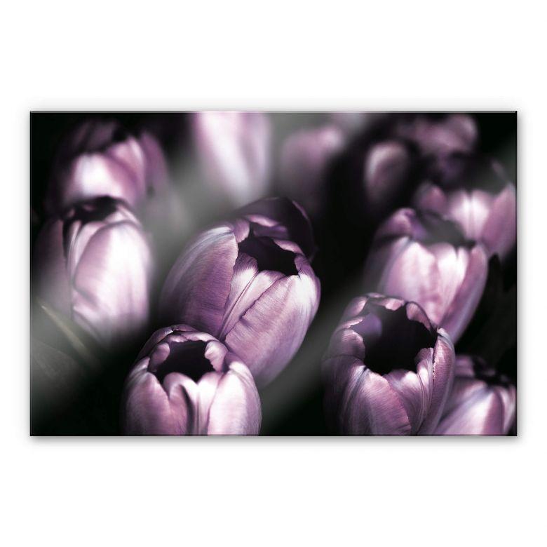 Acrylglasbild Tulips