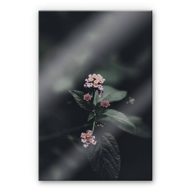 Acrylglasbild Zarte rosa Blüte