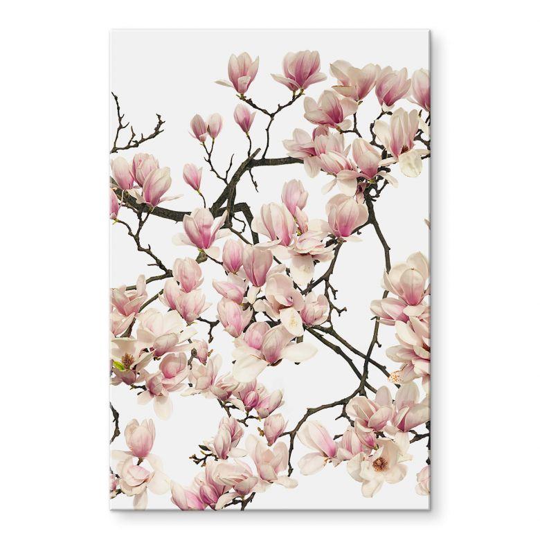 Acrylglas Tan Kadam - Flora Magnolia