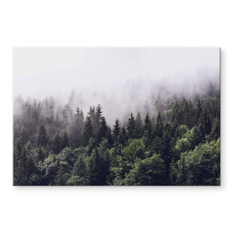 Acrylic Print Foggy Forest