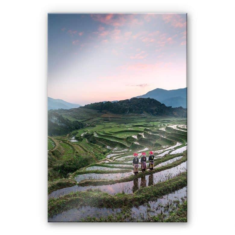 Acrylglasbild Colombo - Reisterrassen in Vietnam