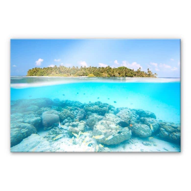 Acrylglasbild Colombo - Unterwasserwelt der Malediven