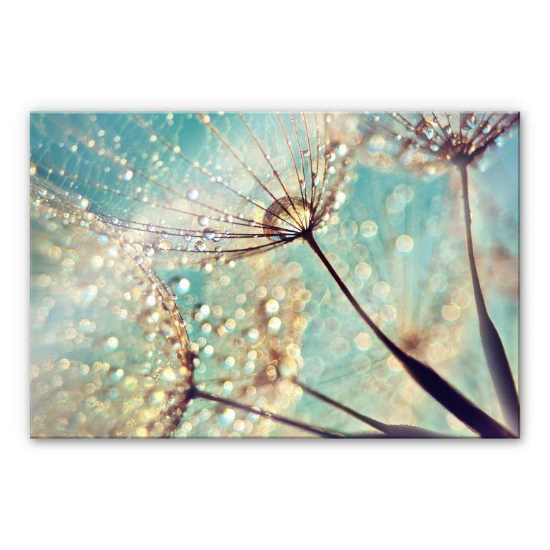 Acrylic Glass Delgado - Magic dandelion