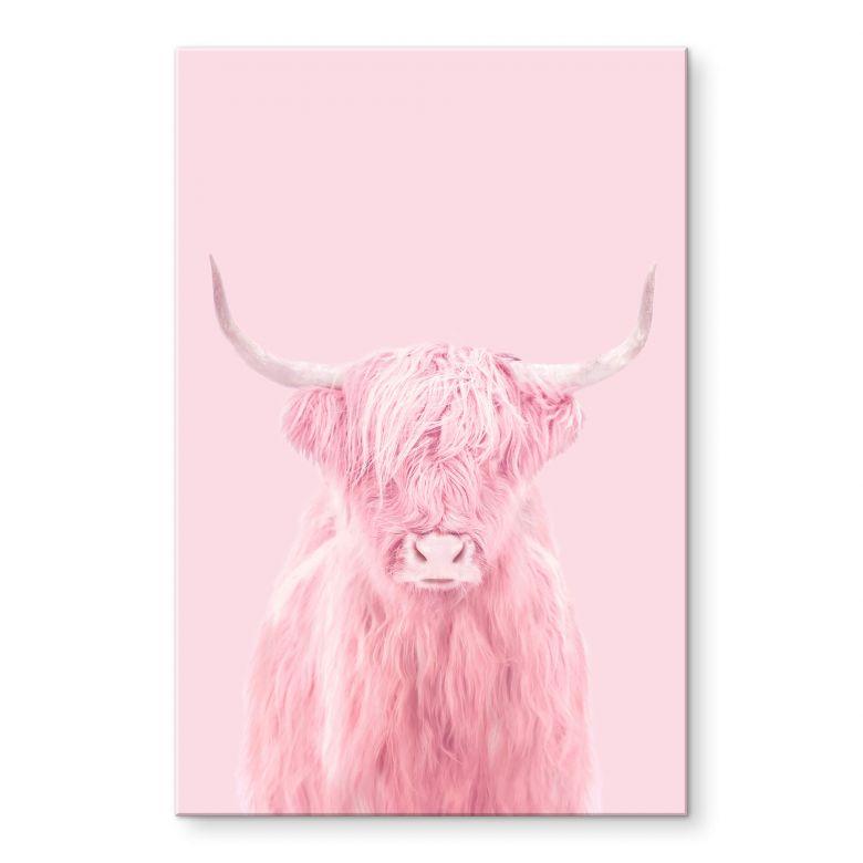 Stampa su acrilico Fuentes - Highland Cow