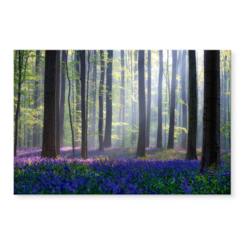 Acrylglasbild Popan - Glockenblumen