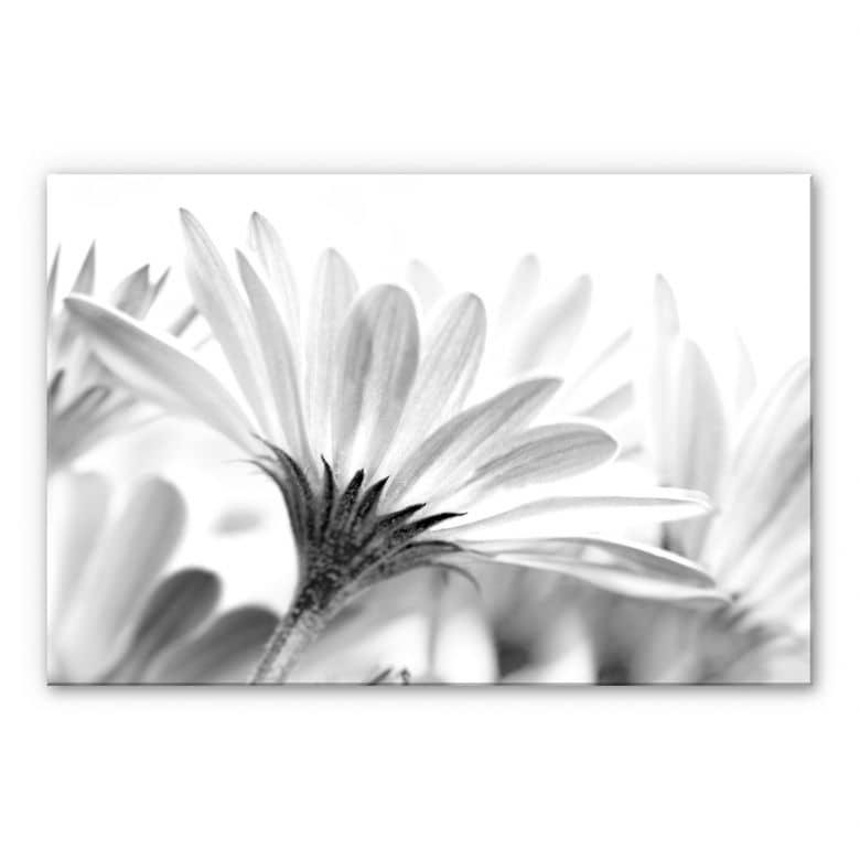 XXL Wandbild Gänseblümchen im Detail