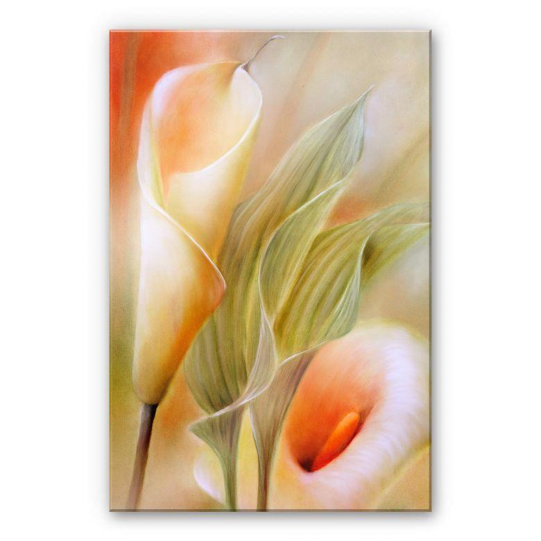 Acrylglasbild Schmucker - Callas