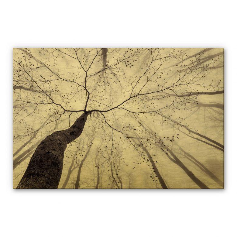 Alu-Dibond mit Goldeffekt Pavlasek - Ein Blick in die Baumkronen