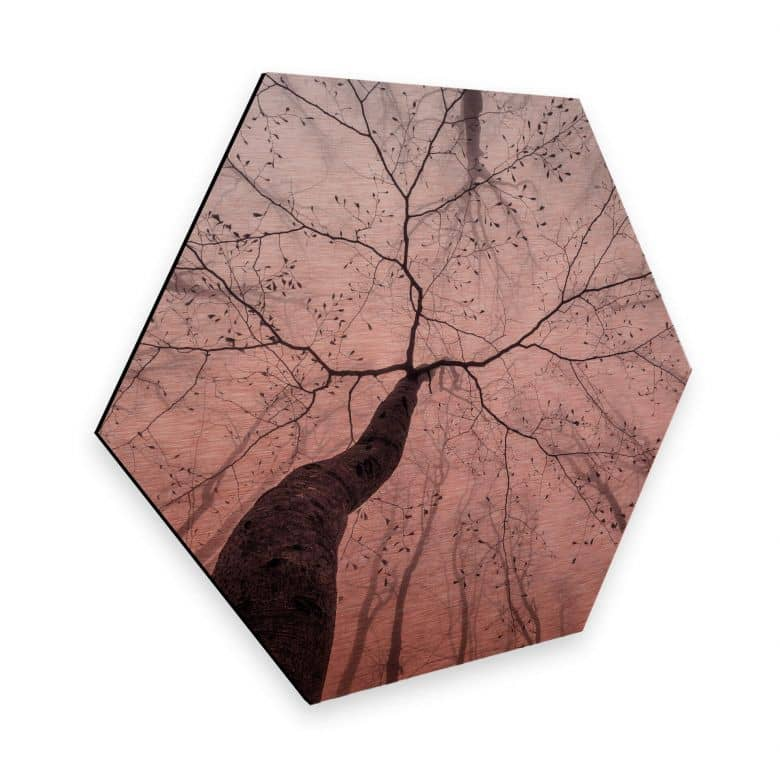 Hexagon - Alu-Dibond-Kupfereffekt Pavlasek - Ein Blick in die Baumkronen