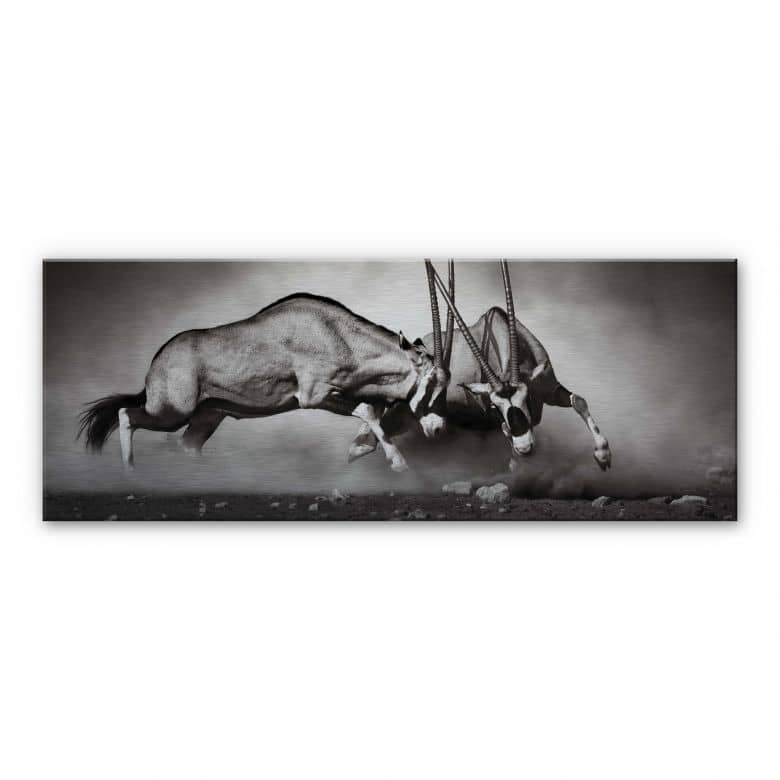 Duel - Panorama Aluminium print