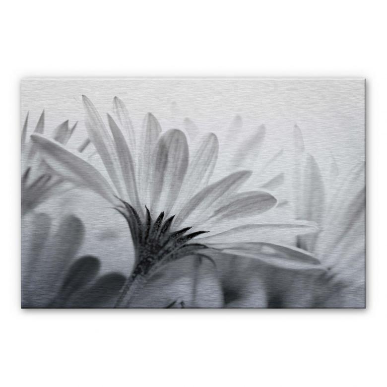 Alu-Dibond Bild Gänseblümchen im Detail