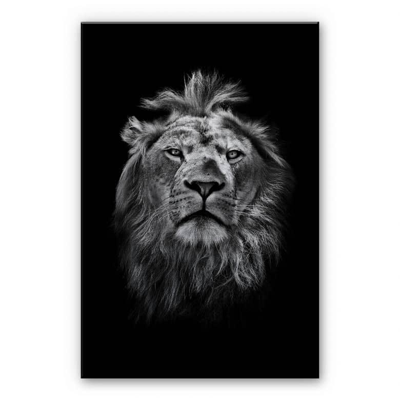 Alu-Dibond Silver effect - Lion
