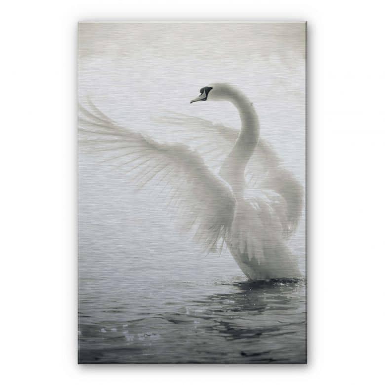 Proud Swan Aluminium print