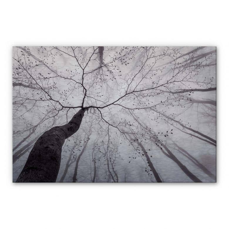 Tableau en Alu-Dibond effet argenté Pavlasek - Vers la cime des arbres