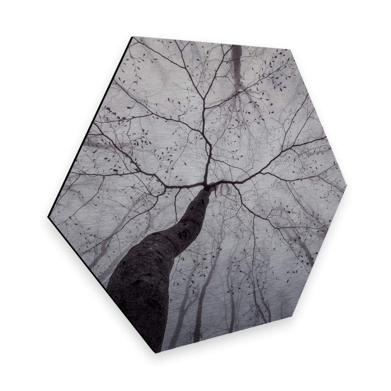 Hexagone - Alu-Dibond effet argenté Pavlasek  -  Vers la cime des arbres