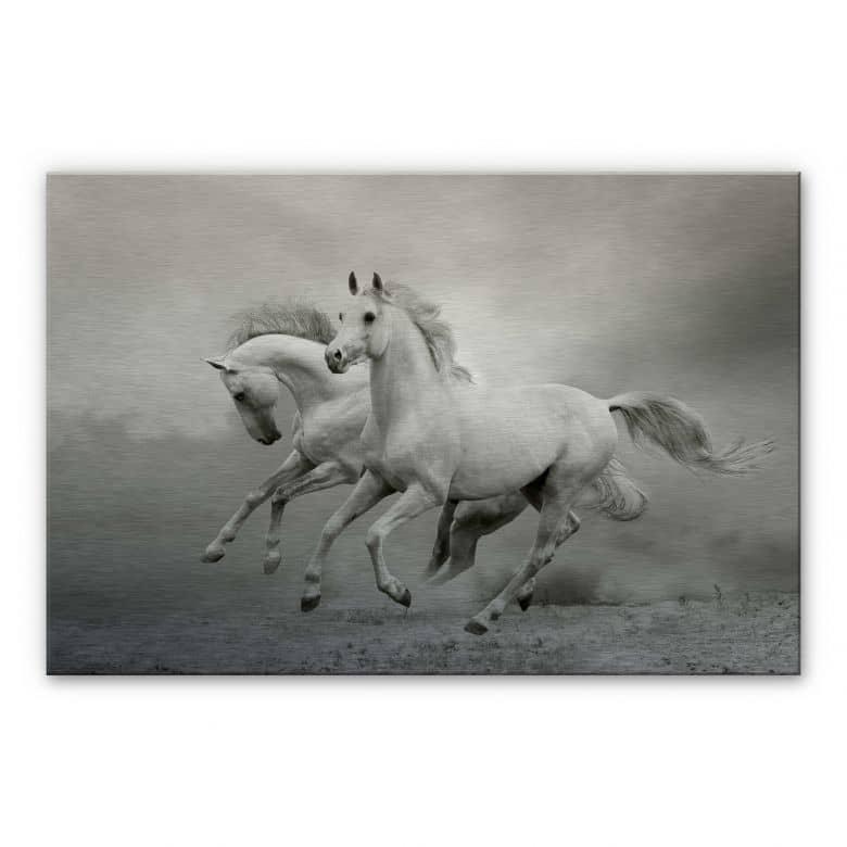 Galloping Horses Aluminium print