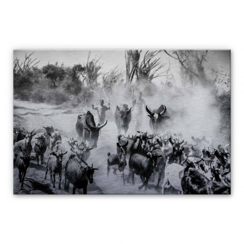Alu-Dibond with silver effect Tagliarino - Goat herd in Africa