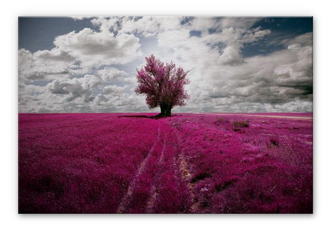 The Lonely Tree Aluminium Print