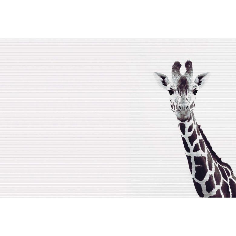 Livingwalls Fototapete ARTist Giraffe Potrait mit Giraffe schwarz, weiß