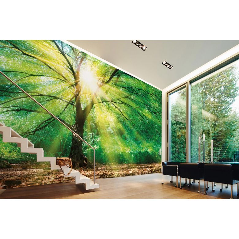 Livingwalls Fototapete Designwalls Forest Light Wald