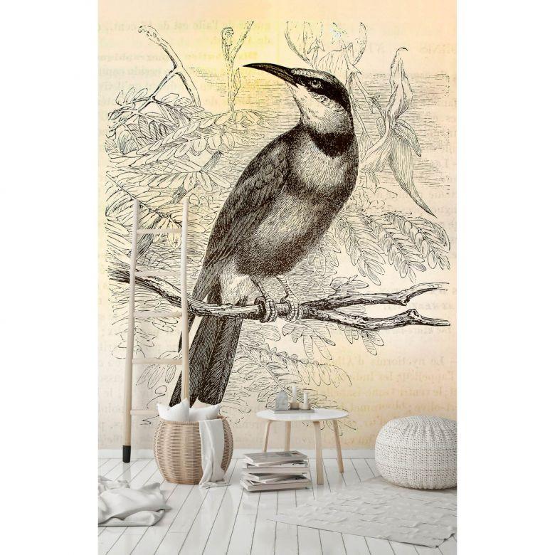 Livingwalls Fototapete Walls by Patel vintage birds 2