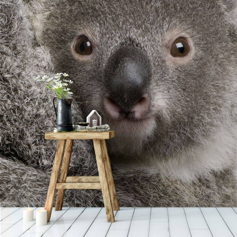 fototapete cuddly koala niedliche dekoration f r die. Black Bedroom Furniture Sets. Home Design Ideas