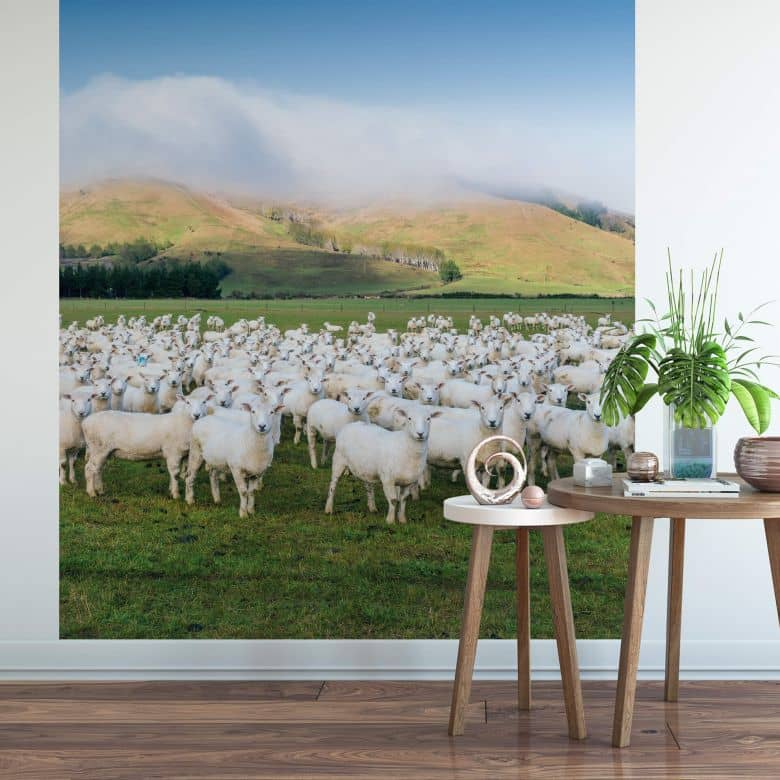Fototapete Colombo - Schafherde in Neuseeland - 192x260 cm