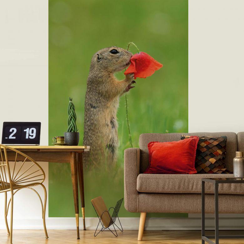 Fototapete van Duijn - Erdhörnchen mit Mohnblume