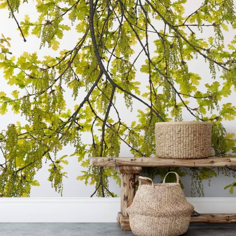 Photo Wallpaper Kadam - Oak tree - 192x260 cm