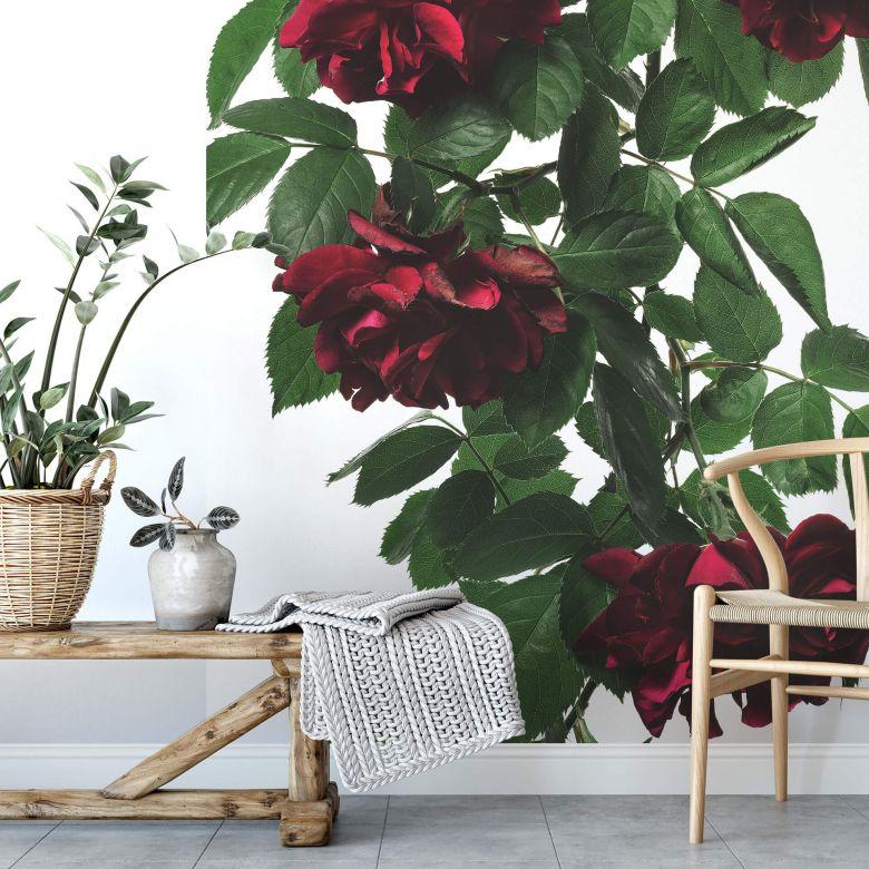Fototapete Kadam - Flora Rose - 192x260 cm