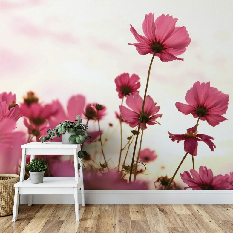 Pink Kosmeen - Photo Wallpaper