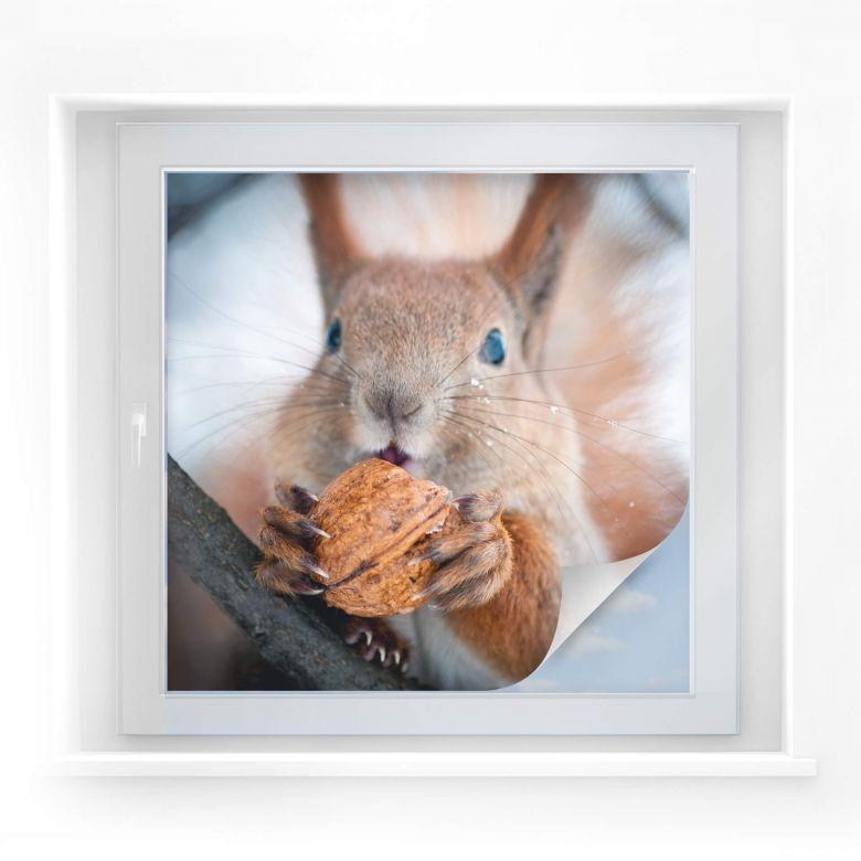 sichtschutzfolie eichhörnchen mit nuss - quadratisch