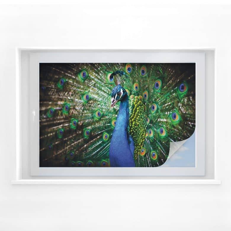 Sichtschutzfolie Beautiful Peacock
