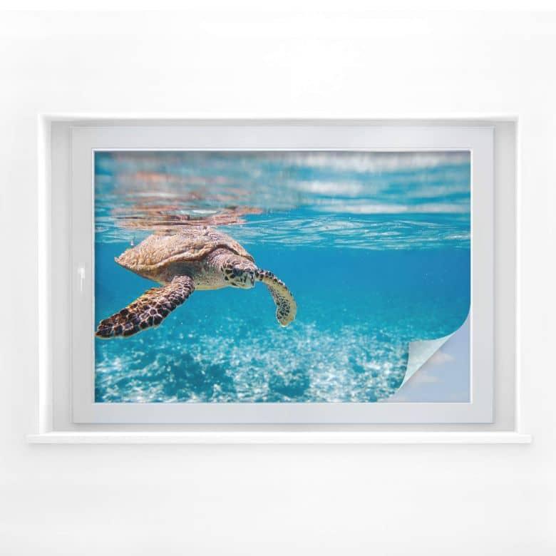 Pellicola adesiva per vetri - tartaruga in viaggio