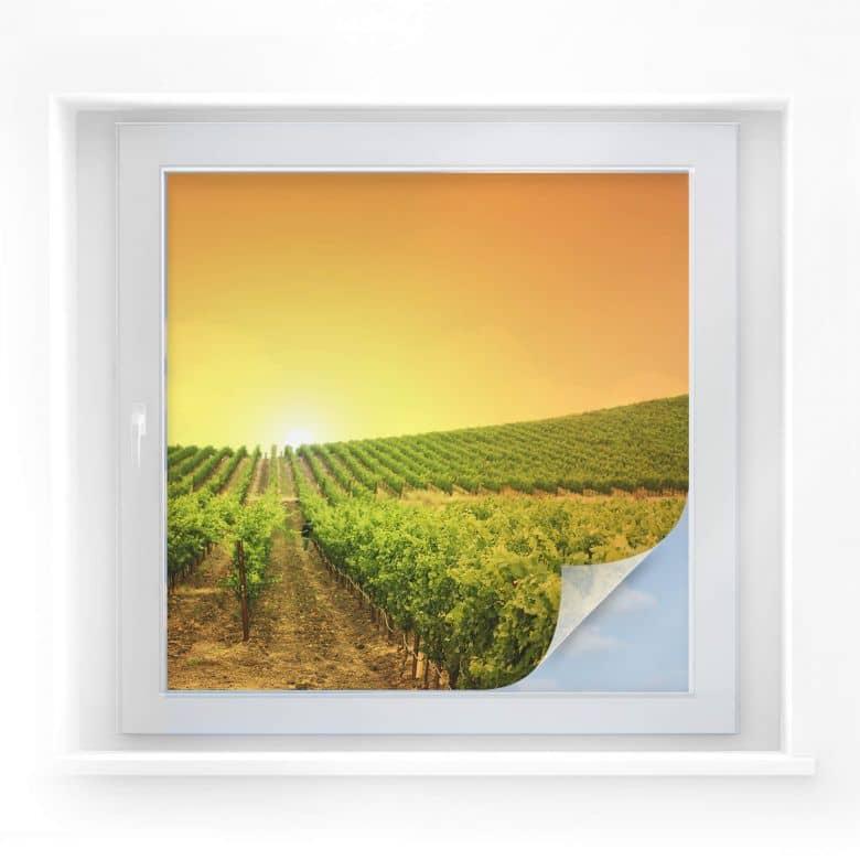 Sichtschutzfolie Sonnenuntergang im Weinberg