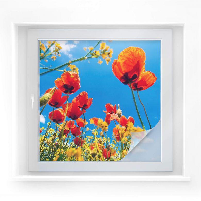 Sichtschutzfolie Mohnblumen im Rapsfeld - quadrati