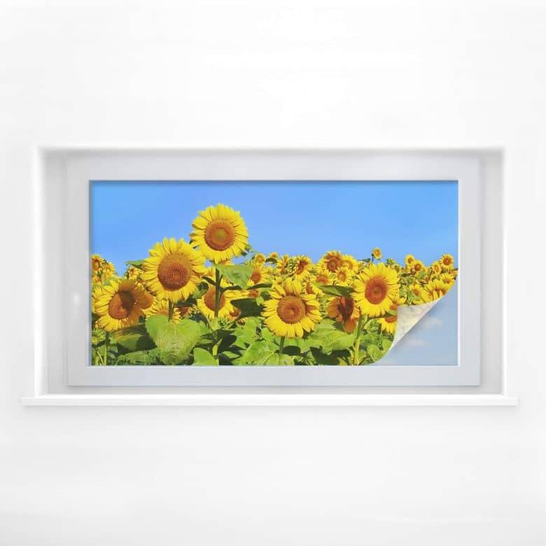Sichtschutzfolie Sonnenblumenfeld - Panorama