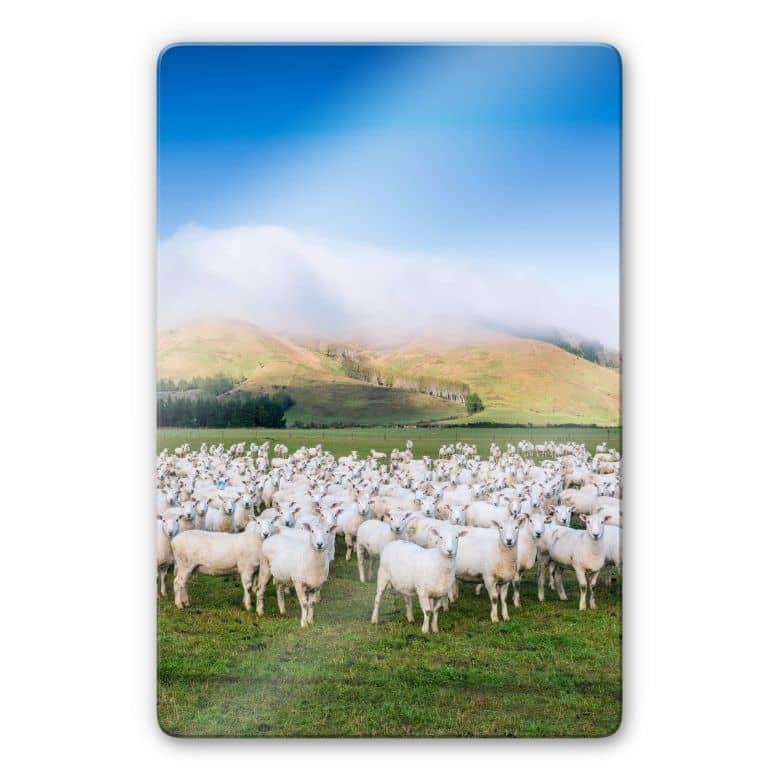 Glasbild Colombo - Schafherde in Neuseeland