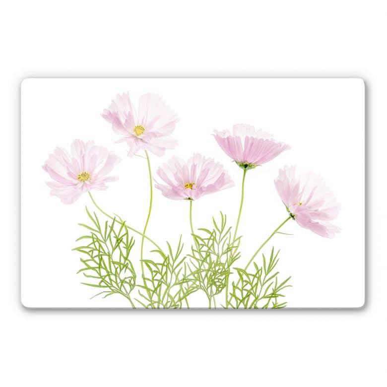 Glasbild Disher - Sommerblume