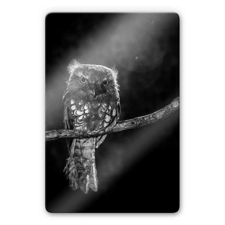 Glasbild Wilianto - Staring Owl