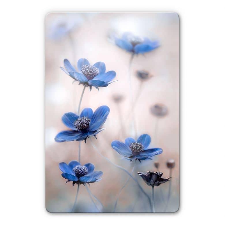 Glasbild Disher - Blue Cosmos
