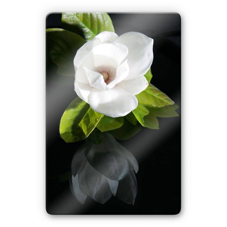 Glasbild Orchideengarten