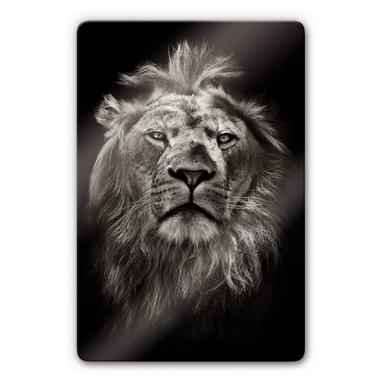 Glasbild Lion