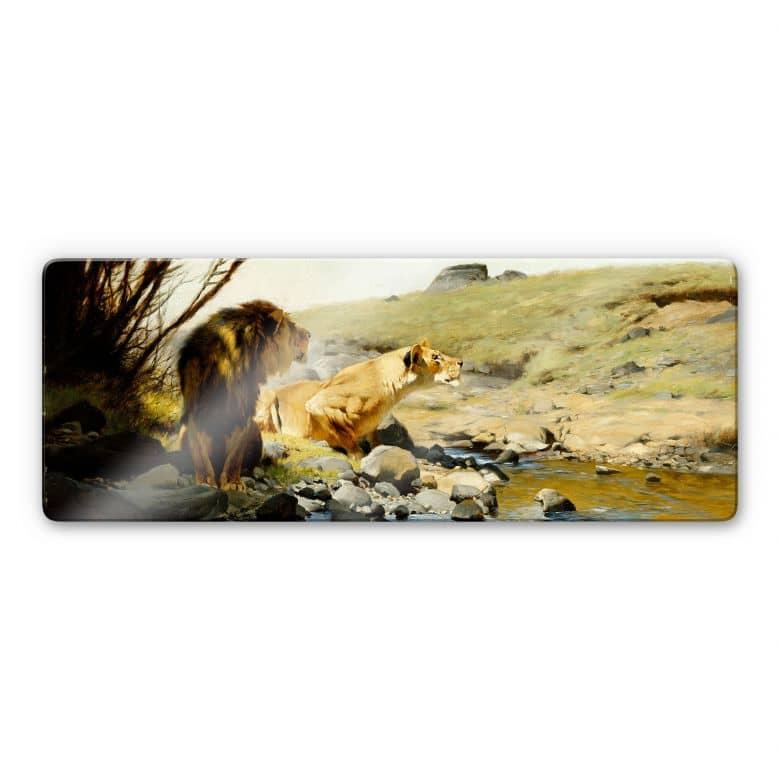 Glasbild Kuhnert - Ein Löwe und eine Löwin an einem Bach