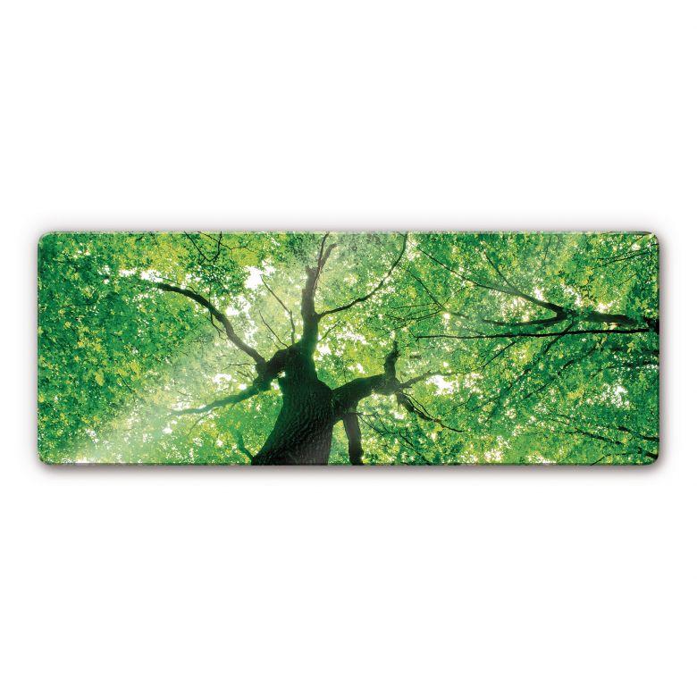 Glasbild Under the Trees - Panorama